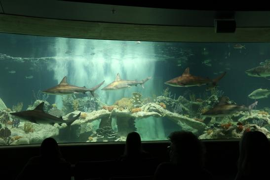 OdySea Aquarium opens with anticipation, controversy