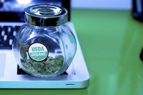Medical marijuana dispensaries on Prop 205