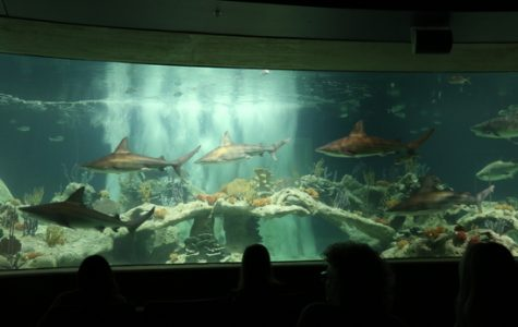 "The OdySea Aquarium's ""Living Sea Carousel"" is a 20-minute carousel experience that takes guests around four exhibits that feature rays, marine turtles, seals, sea lions and various sharks."