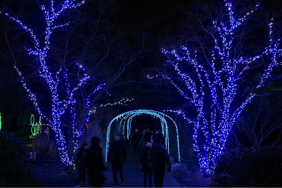 Holiday Lights at the National Zoo