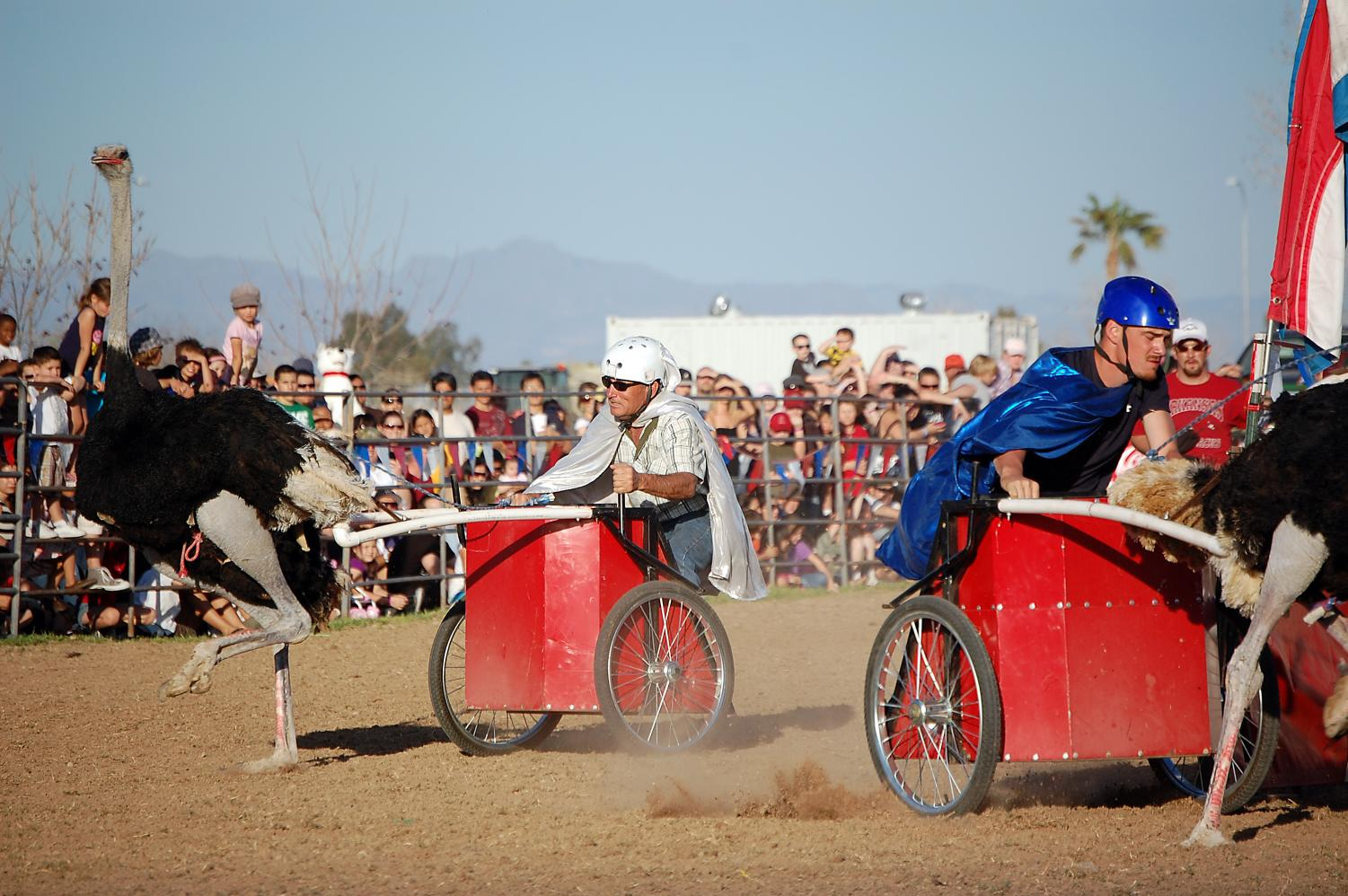 Picture of one of the many activities to view at the Ostrich Festival