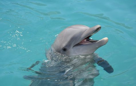 """Khole"" one of the four dolphins that died at Dolphinaris Arizona."