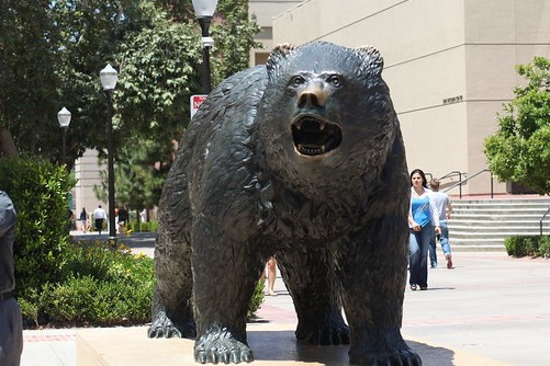 UCLA statue of Bruin outside campus of UCLA (Flickr)