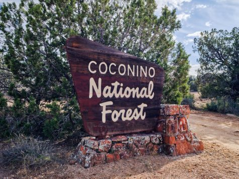 Rains and cooler weather in the northern part of Arizona has prompted the reopening of Coconino and Kaibab national forests